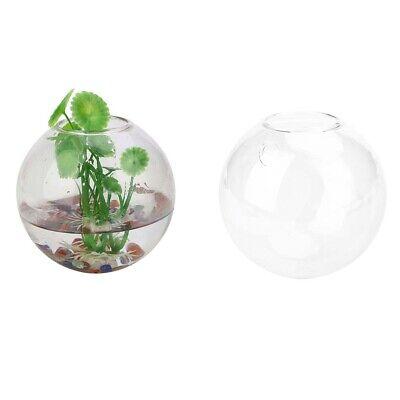 New Wall Hang Glass Flower Planter Vase Terrarium ContainerGarden Decor Ball