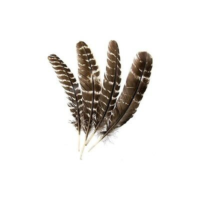 Peruvian Q'ero Shamans Imitation Eagle Barred Feather