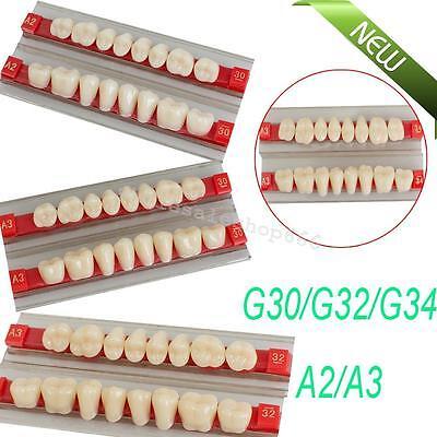 New Acrylic Resin Posterior Teeth Denture Dental Teeth Shade G30g32g34 A2 A3