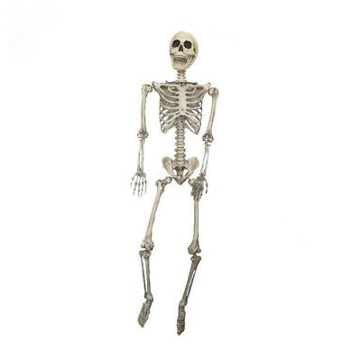 Halloween Party Decor Adults (67