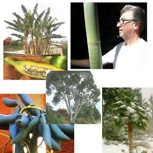 5 mal frosthart winterhart banane blaugurke bambus. Black Bedroom Furniture Sets. Home Design Ideas