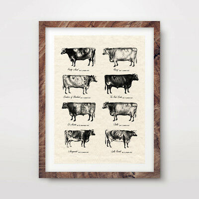 VINTAGE COW BREEDS FARM ANIMAL CHART ART PRINT Agriculture Poster Wall Picture Animal Art Vintage Animal