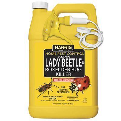 Harris HBXA-128 Asian Lady Beetle & Box Elder Bug Killer, 128 Oz