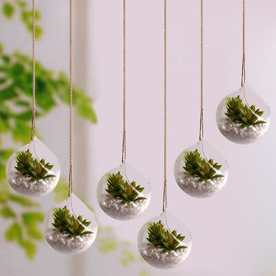 Glass Terrarium Globes (6pcs Glass Hanging Planter Air Planter Globe Terrarium Decor for Succulent)