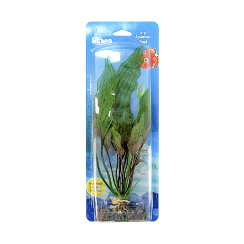 FINDING NEMO FLOWERING LACE MD PLANT LICENSED