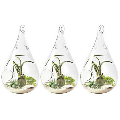 "3 Pack Hanging Terrarium 5.5"" Clear Glass Teardrop Flower Plant Container Decor"