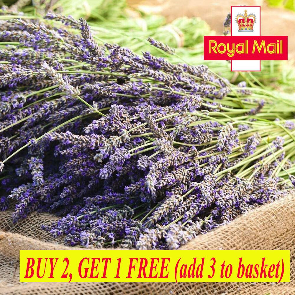Home Decoration - 100Pcs Natural Lavender Dried Flowers Gifts Flower Bouquet Home Wedding Decor !!