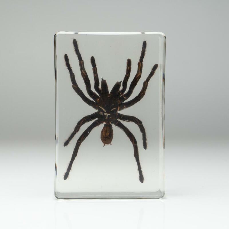 Tarantula Spider in Lucite