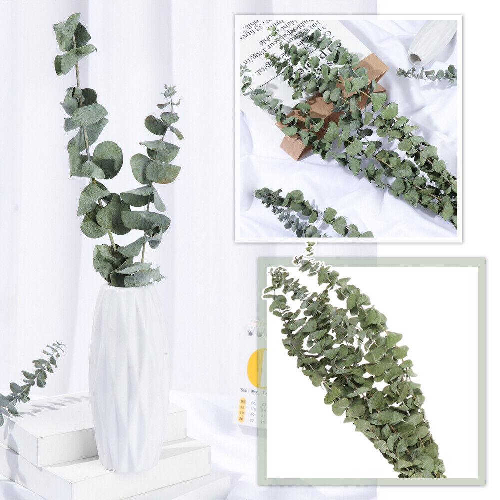 Home Decoration - 10pcs Natural Dried Flower Eucalyptus Branches Leaves Bouquet Home Decor~UK
