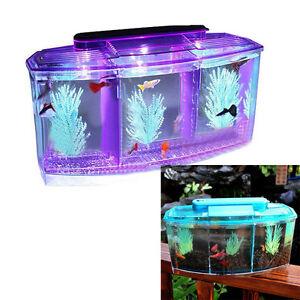 Crystal shrimp bettas fish tank aquarium with led light for Purple betta fish for sale