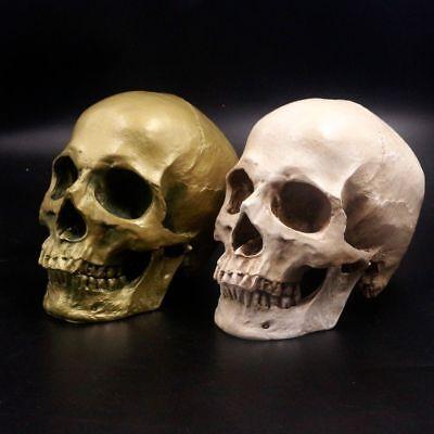 Human Skull Lifesize 1:1 Resin Model Aquarium Fish Tank Halloween Decoration