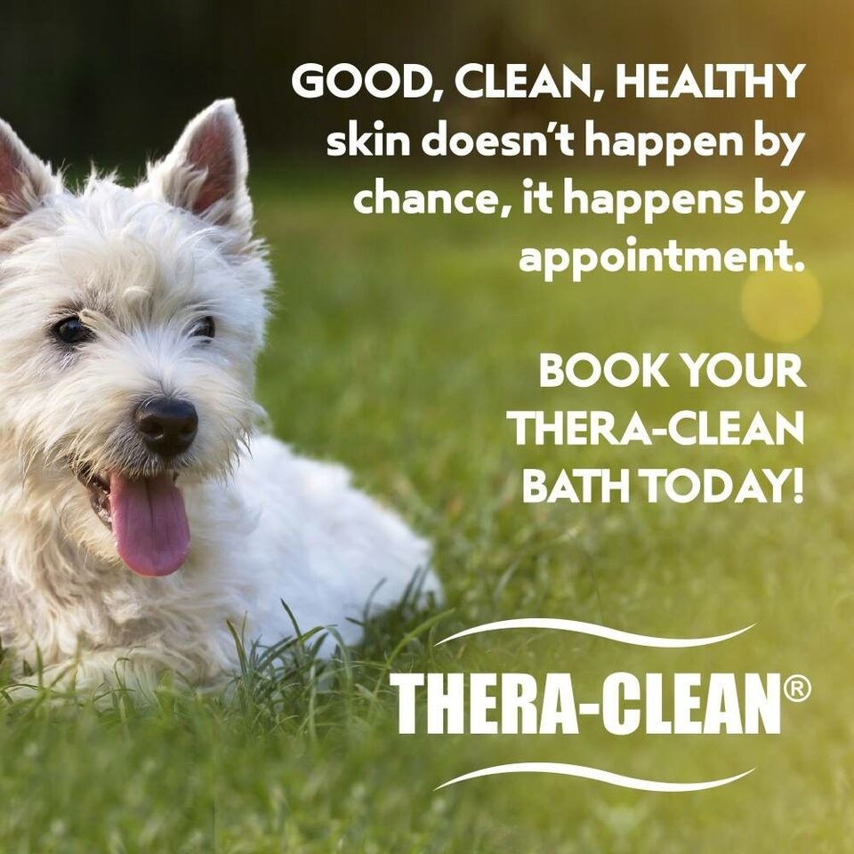 Head to tail pet spa dog cat grooming certified stylists listing item xflitez Image collections