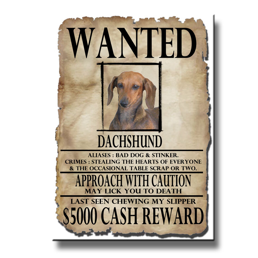 DACHSHUND Wanted Poster FRIDGE MAGNET No 1 Doxie DOG