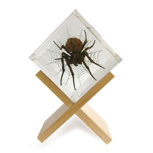 Real Insect Desk Spider in Web Decoration/Paperweight Cube with Wood Base