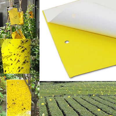 Pest Trap-Aphid Fruit Fly Houseplant Insect Sticky Pest Control- Waterproof-Best