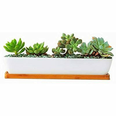 Mini 11x2.38x1.76inch White Ceramic Long Rectangular Succulent Flower Planter