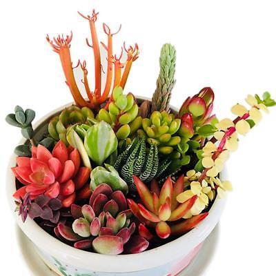 10 Assorted Varieties Succulents Live Succulent Cuttings For Wedding Party Decor](Succulent Wedding)