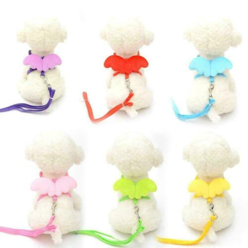 Cute Angel Wing Pet Dog Cat Leashes And Collars Puppy Leads