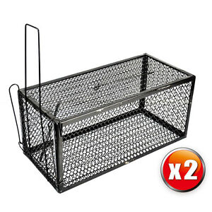 how to set up rat trap cage