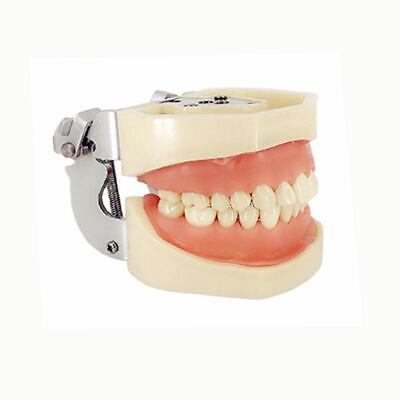 Kilgore Nissin 200 Type Dental Typodont Model 28 Pcs Removable Screw-in Teeth
