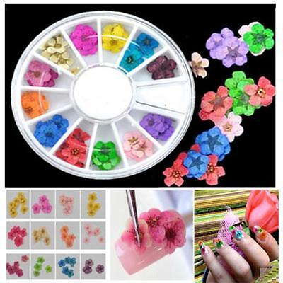 36pcs  Tips Dried 3d Flower Nail Art Sticker Decoration Diy