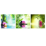 Framed Canvas Print Painting Picture Home Decor Landscape Bamboo Zen Flowers