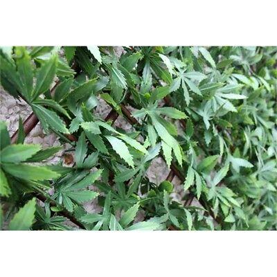 Wonderwal Trellis 100 x 200cm, Green Acer