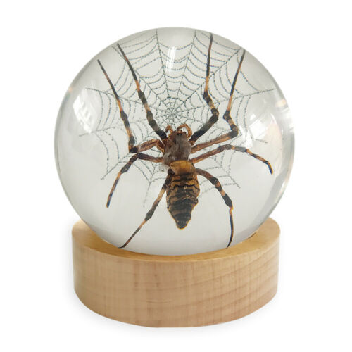 Real Insect Desk Spider in Web Decoration/Paperweight Visible All Sides on Wood