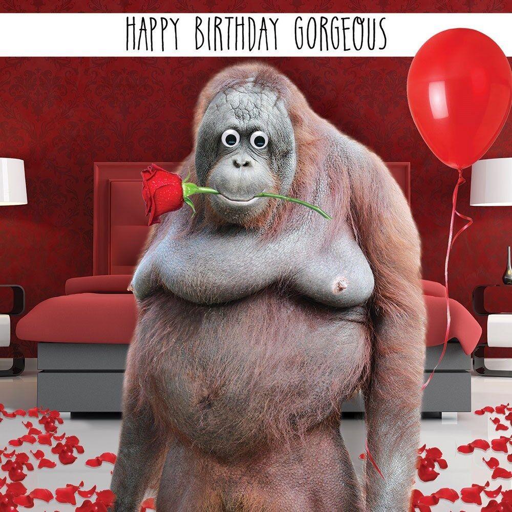 Orang-outan blank photo carte de vœux fun tracks toute occasion greetings cards