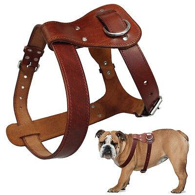 Best Genuine Leather Dog Harness for Pitbull Bulldog Boxer Medium Large
