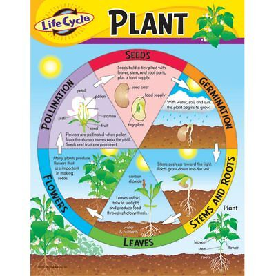 Life Cycle of a Plant Learning Chart Trend Enterprises Inc. T-38179