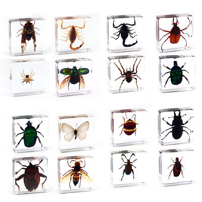 insect collection for sale  Shipping to Canada