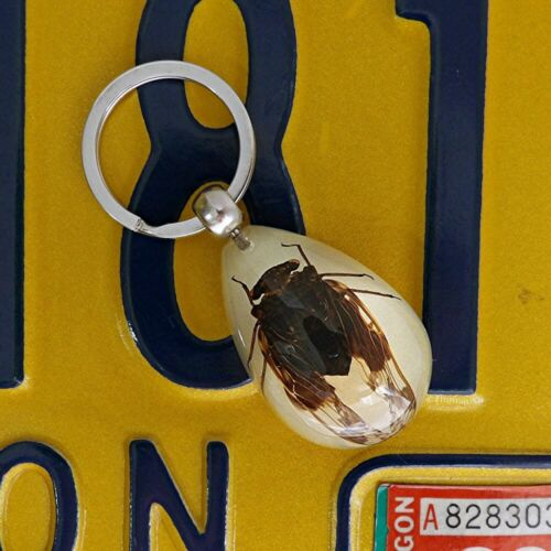 Real Insect Key Chain - Golden Cicada Glow- in-the-Dark