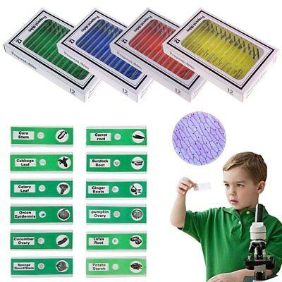 12pc Kids Microscope Slides Entomology Plastic Prepared Microscope Slides Sample