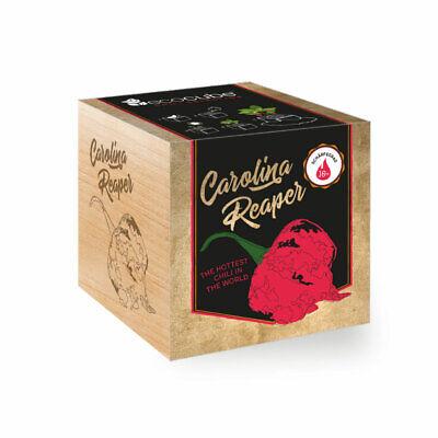 Chilipflanze Carolina Reaper im Holzwürfel Chili selbst züchten Anzuchtset Samen