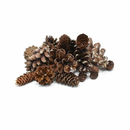 Preserved Assorted Pine Cones, Natural, 16-Piece