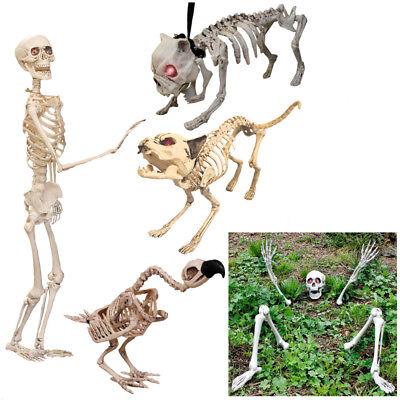 Il Lebensgröße Skelett Requisite Halloween 5 Dekorationen Hund - Leben Größe Skelett Halloween