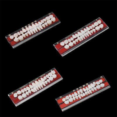 Colors 1 Set 24 Teeth Tooth Shade Guide Dentures Dental Materials