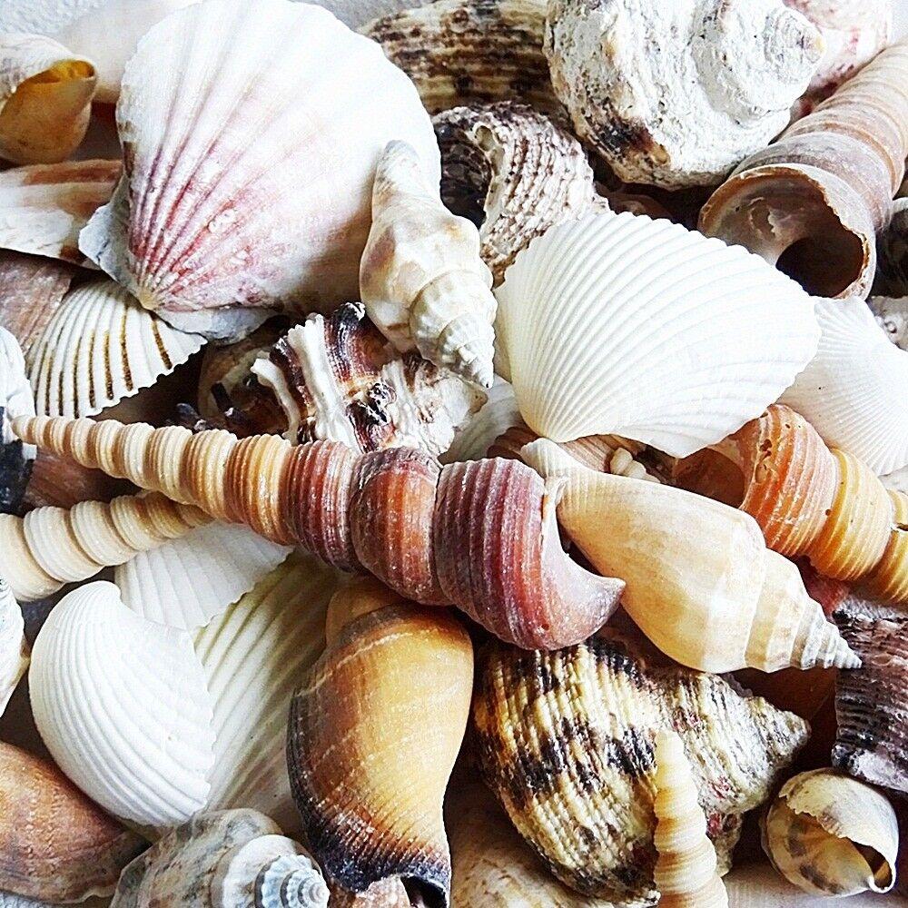 Muschelmix groß 910g Deko Maritim Muschel Dekoration Bastel Muscheln Dekomuschel