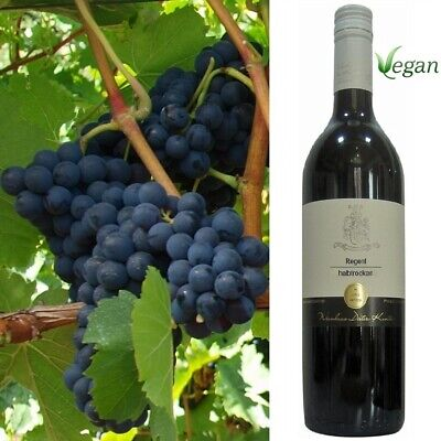 Regent halbtrocken Rotwein VEGAN Pfälzer Weingut Dieter Kuntz 6 Flaschen