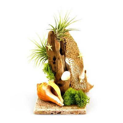 DIY Driftwood Air Plant Beach Themed Terrarium with Stone