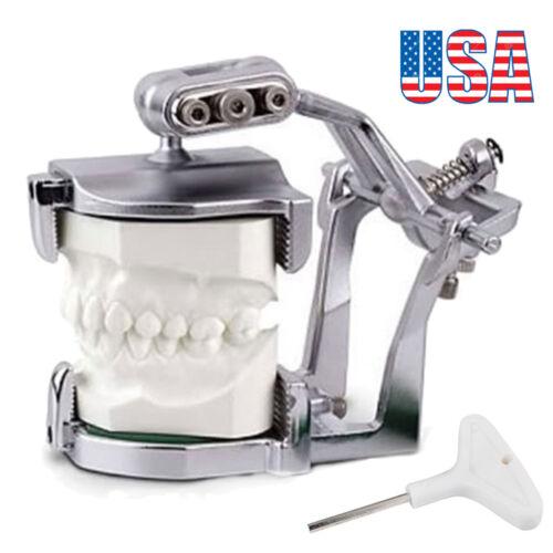 Adjustable Magnetic Articulator Dental Lab Equipment Dentist Full Teeth model