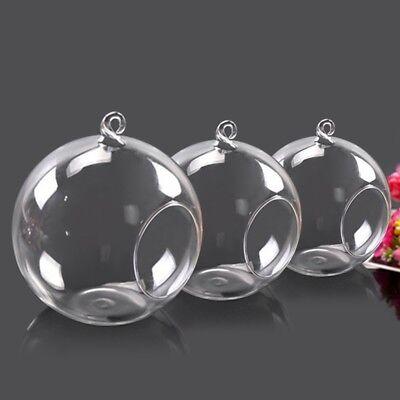 Glass Terrarium Globes (3pcs Hanging Glass Terrarium Globe Round Ball Plant Air Planter Flower Vase)