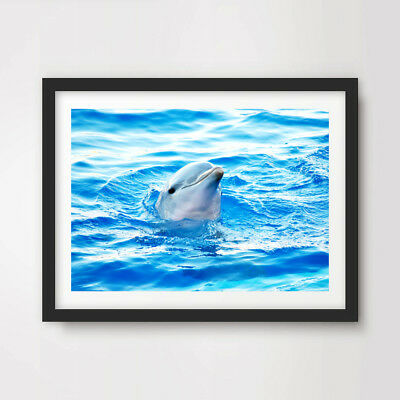 DOLPHIN ANIMAL WILDLIFE PHOTOGRAPHY ART PRINT Poster Blue Decor Wall Picture Animal Photography Print