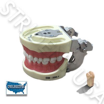 Dental Typodont Model 200 Kilgore Nissin Type Extra Set Of Teeth 32
