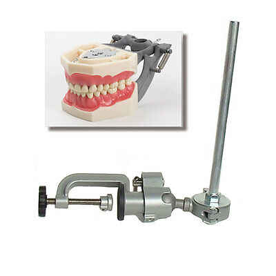 Dental Typodont Fg3 Ag3 And Pole Mount Compatible W Frasaco Brand Teeth