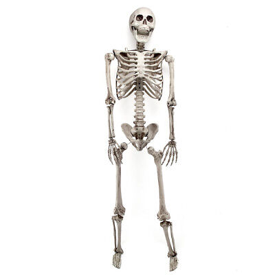170cm Human Life Size Skeleton Skull Full Halloween Prop Decor Model Poseable