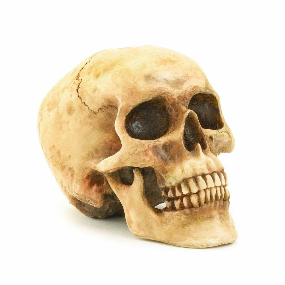 Decor Grinning Realistic Human Skull Statue Halloween Gift H