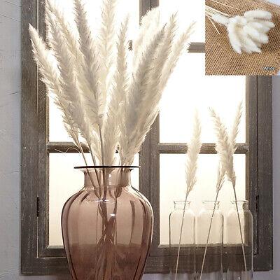 Home Decoration - 15/30 PCS Artificial Dried Pampas Grass Phragmites Communis Bunch Home Decor