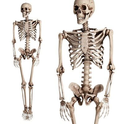 5.6ft Halloween Poseable Human Skeleton Full Life Size Props Party - Decorate Halloween